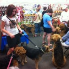 Airedales filled Airedale Antics on Sunday for a fundraiser.
